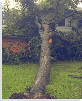 Storm Damage Allen