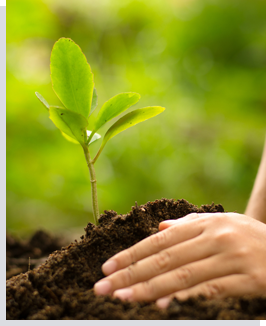 services_tree_planting